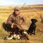 hunting birds by labrador retriever