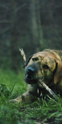 dogs biting habit